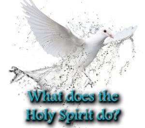 The Work of the Holy Spirit in the Salvation: A Brief Overview of the Spirit's Role in the Doctrines of Grace