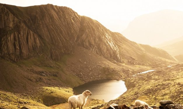 Biblical Counseling: A Ministry to Serve and Shepherd