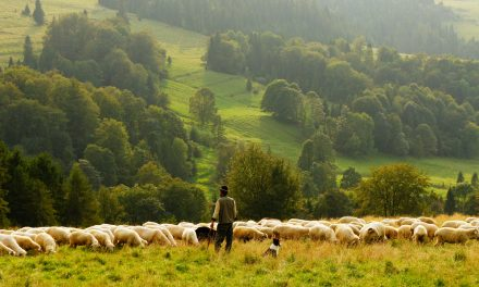 The Lord Is My Shepherd. So What?