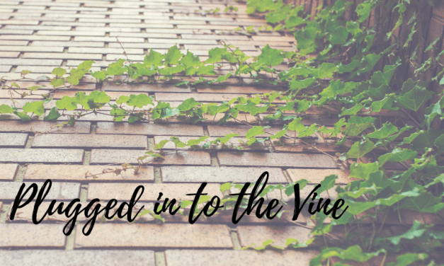 Introduction to the Plugged in to the Vine