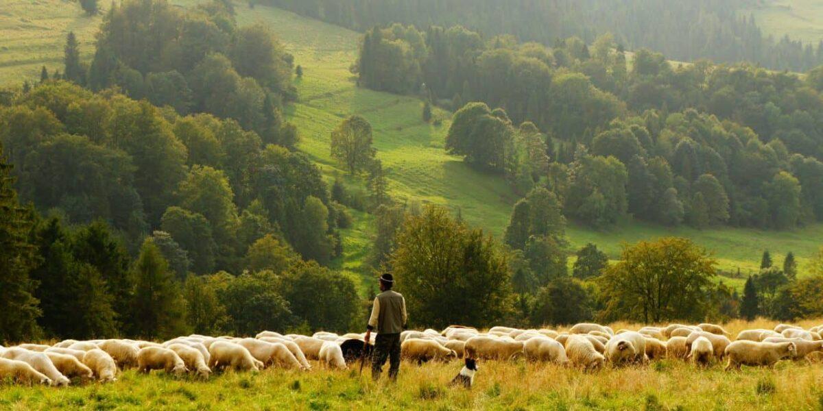 Shepherd, The Lord Is My Shepherd. So What?, Servants of Grace
