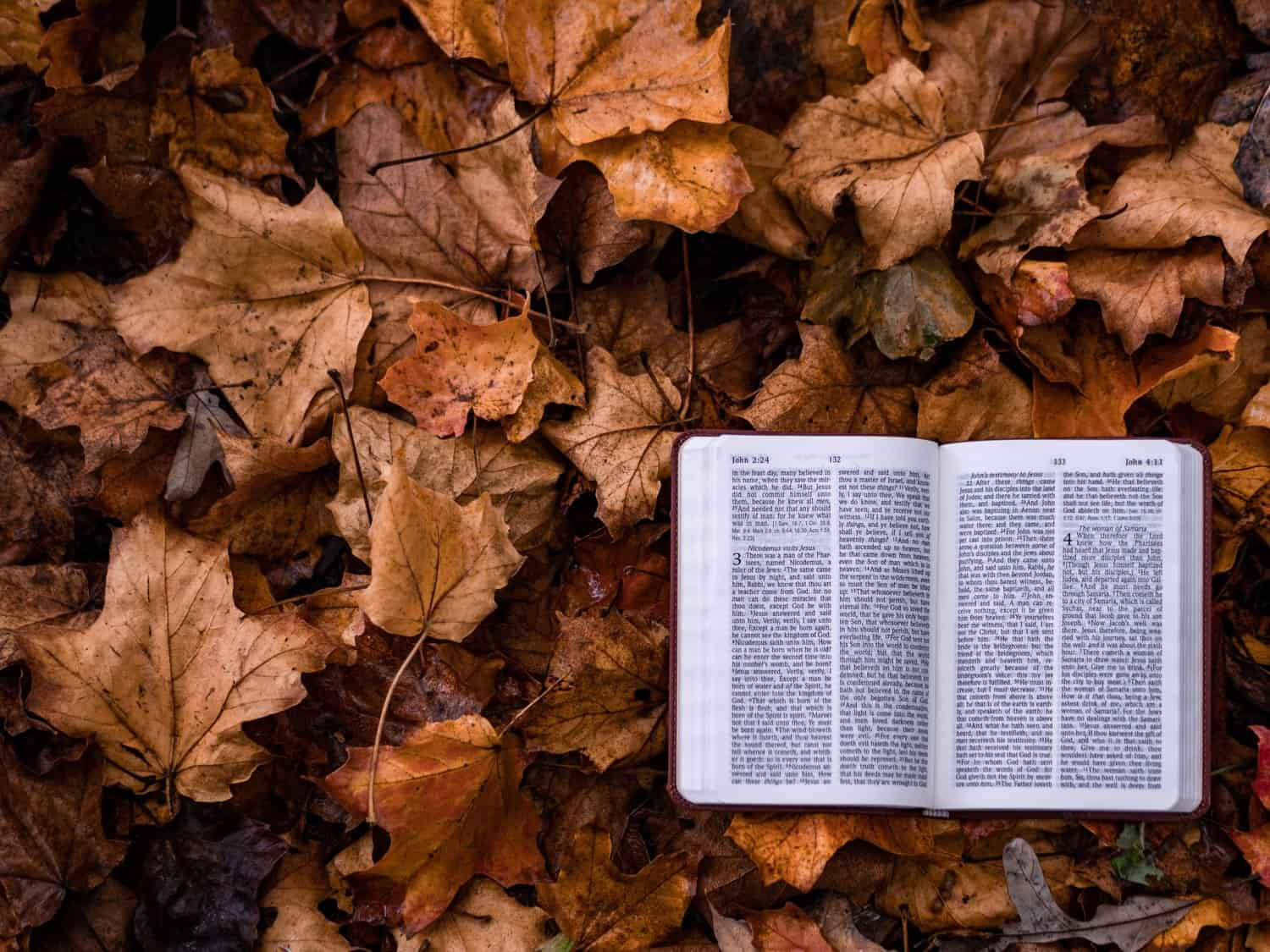 Assurance, Four Scriptures to Read When You're Dealing with Lack of Assurance, Servants of Grace, Servants of Grace