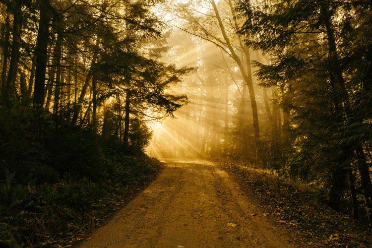 Path, Walking the Path of Lament, Servants of Grace, Servants of Grace